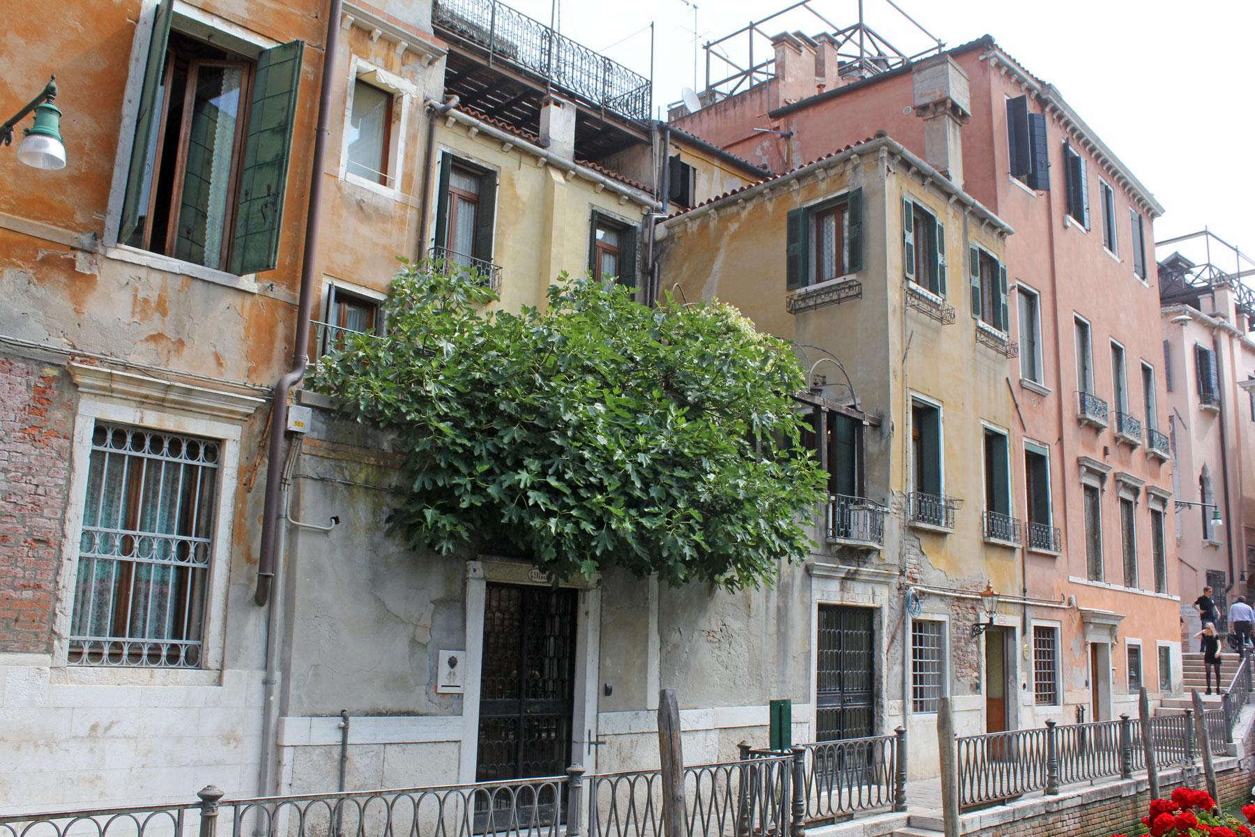 Feigenbaum in Venedig